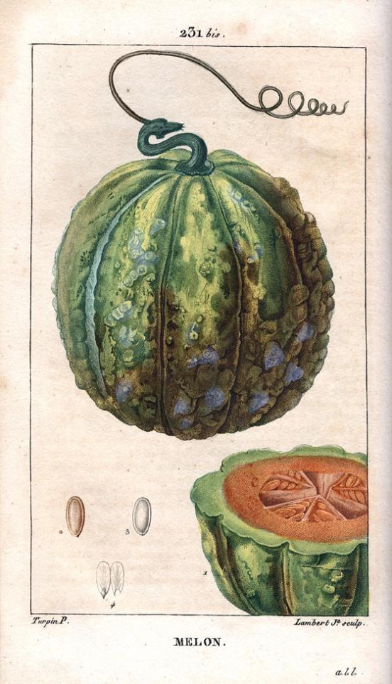 Melon Turpin